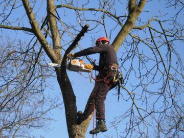 Процедура спила деревьев