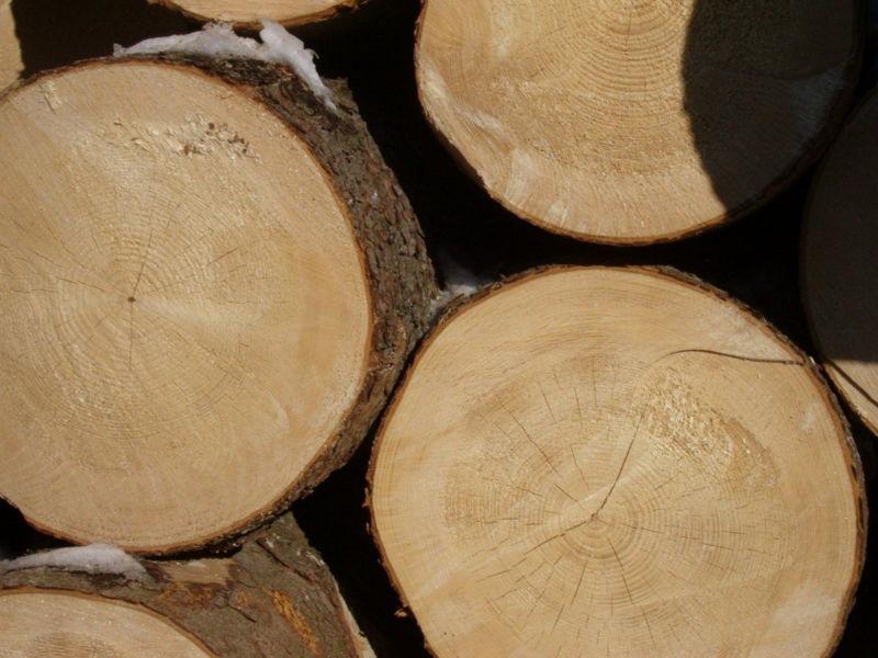 Особенности древесины